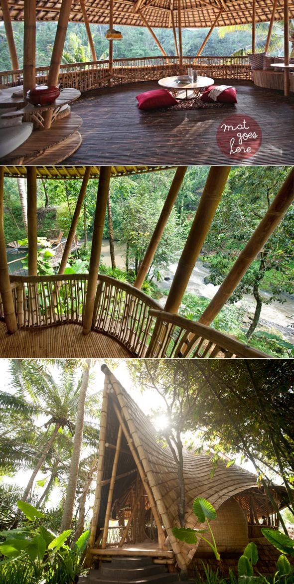 rain forest yoga