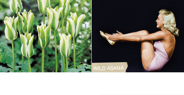 marilyn monroe, tulip, navasana